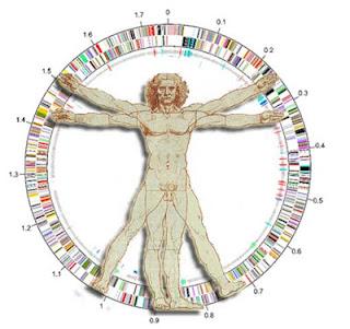 human+genetics